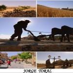 JORGE TORAL (Small)